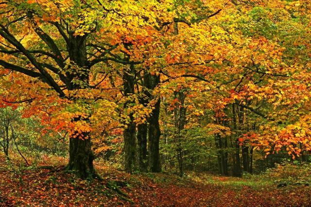 La forêt en automne offre teintes, senteurs et saveurs multiples et innombrables
