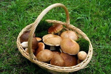 Panier rempli de champignons: bolets, trompettes de la mort et cêpes ; à ne pas confondre avec les amanites en tout genre et autres pièces mortelles